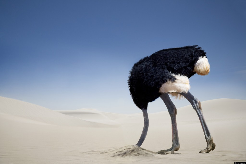 Ostrich burying its head in the sand